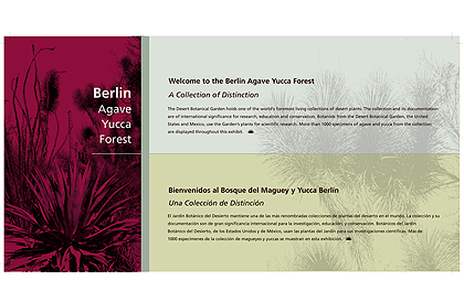 Berlin-Agave Yeca Forest
